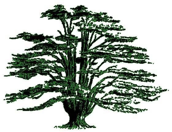 The Cedars House : Cedar tree